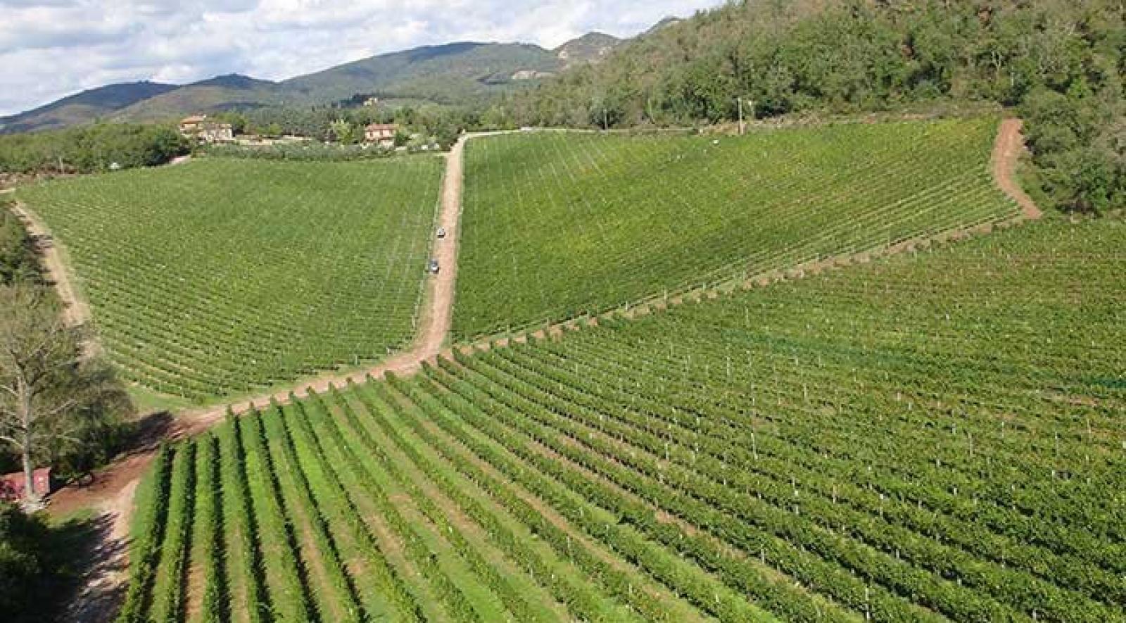 Capannelle Azienda Vinicola di Gaiole in Chianti (Siena)