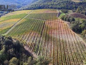 Renieri Montalcino
