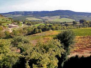 Renieri Montalcino 8
