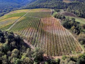 Renieri Montalcino 10